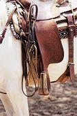 foto of brahma-bull  - Saddle on a white horse - JPG