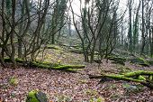 foto of humidity  - Mossy and humid european forest covered with fallen trees and leaves - JPG