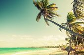 picture of atlantic ocean  - Palm trees grow on a beach - JPG