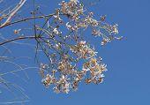 foto of jasmine  - Beautiful tiny flowers of jasmine - JPG