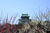 image of kinky  - Osaka Castle and plum blossoms in spring season  - JPG