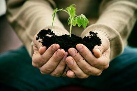 foto of farmer  - Gardener with vegetable seedling - JPG