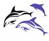 stock photo of dolphins  - Isolated dolphins on white background - JPG