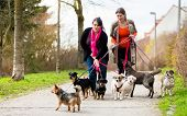 Dog sitters walking their customers poster