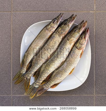 Fresh Fish Is Pike Four