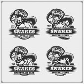 Volleyball, Basketball, Soccer And Football Logos And Labels. Sport Club Emblems With Snakes. poster