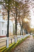 Autumn Park Alley In The Fog With Trees And Orange Fallen Leaves. Foggy Autumn Alley In Park. Park A poster
