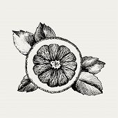 Hand Drawn Orange Icon. Vector Decorative Orange Fruit In The Old Ink Style. Orange Icon For Brochur poster