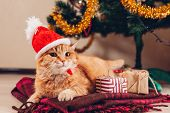 Red Cat Wears Santas Hat Under Christmas Tree. Christmas And New Year Concept poster