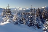 foto of winter landscape  - A frosty and sun day is in mountains - JPG