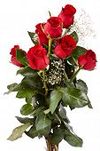 picture of red rose flower  - Red roses are flowers given with pleasure which also symbolize love and affection - JPG
