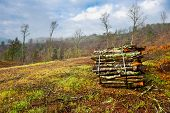 stock photo of afforestation  - Sawed Firewood Dropped in a Pile Italy - JPG