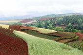 image of loamy  - Rural colorful field landscape in Dongchuan district Yunnan province China - JPG