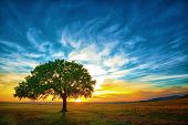 stock photo of oxygen  - Oak tree in a beautiful sunset in Romania - JPG