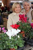 foto of 55-60 years old  - mature ladies in open air market choosing plants - JPG