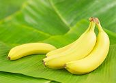 stock photo of banana  - Fresh bananas on banana leaves - JPG