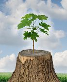 stock photo of cutting trees  - New development and renewal as a business concept of emerging leadership success with an old cut down tree and a new strong seedling growing from the center trunk as a concept of support and building a future - JPG