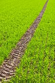 pic of veer  - Tire Path In green Field in springtime - JPG