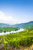 picture of moselle  - famous Moselle Sinuosity in Trittenheim in afternoon sun - JPG