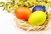 stock photo of willow  - Easter eggs in bird - JPG