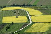 foto of rape-field  - Aerial view of yellow rapeseed  - JPG