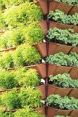 foto of hydroponics  - This is the Organic hydroponic vegetable garden - JPG
