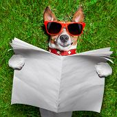 image of dog park  - dog reading a blank newspaper and relaxing on grass in the park - JPG