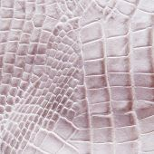 image of lizard skin  - Crocodile skin for texture and background - JPG