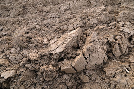 picture of loamy  - Photo of a ploughed farmland with brown loamy soil - JPG