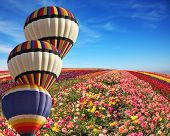 picture of farm landscape  - The cluster from three big balloons is decorated a landscape - JPG