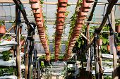 foto of strawberry plant  - Photo of Potted plants on a strawberry farm - JPG