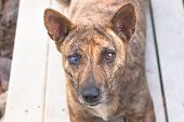 picture of dog eye  - Little homeless dog with sad eyes looking for help  - JPG