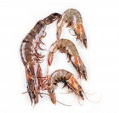 foto of white-tiger  - Raw tiger shrimps on white - JPG