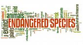 picture of endangered species  - Endangered species  - JPG