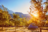 pic of pomegranate  - tent in the pomegranate orchard with riped pomegranates - JPG