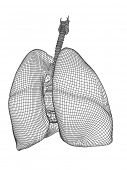 stock photo of respiratory disease  - Concept or conceptual anatomical human man 3D wireframe mesh respiratory system  with lungs isolated on white background - JPG