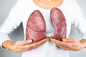 stock photo of exhale  - Woman showing two artificial model lungs in front of chest - JPG