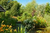 image of english cottage garden  - Quaint English cottage garden with pond and a variety of plants and flowers - JPG
