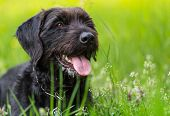 Cute black mutt dog with funny face sitting on spring meadow. poster
