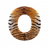 Tiger letter O - Capital 3d Feline fur font isolated on white background. This alphabet is perfect f poster
