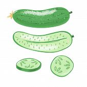 Cucumber Set - Whole, Half And Sliced, Top And Side View, Textured Vector Illustration Isolated On W poster
