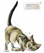 Cat. Watercolor Home Pet Illustration. Cats Breeds Series. Domestic Animal. poster