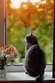picture of festering  - cat sitting on the windowsill in the flowers on the background of the window - JPG