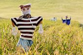 stock photo of hanbok  - Scarecrow on the rice field during Chuseok korean traditional holida - JPG