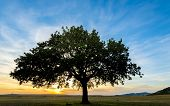 foto of siluet  - sunset and siluet of tree on field - JPG