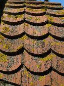 picture of lichenes  - background red old roof tiles covered with moss and lichen - JPG