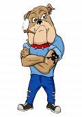 stock photo of thug  - Cartoon illustration of a bulldog as a thug - JPG