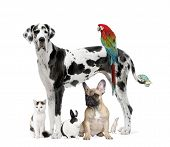 Group Of Pets - Dog,cat, Bird, Reptile, Rabbit poster
