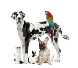image of cat dog  - Group of pets  - JPG