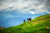 Horses On Green Valley In Mountains Rural Landscape With Moody Sky Clouds